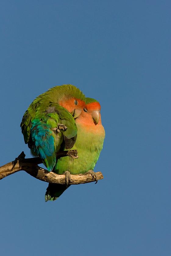 KAT wildlife photography_0077.jpg