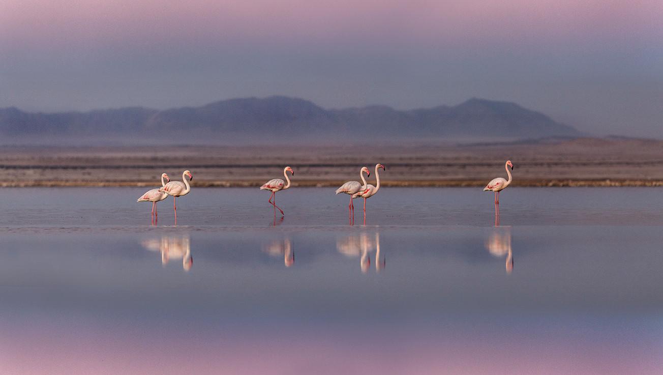 KAT wildlife photography_0074.jpg