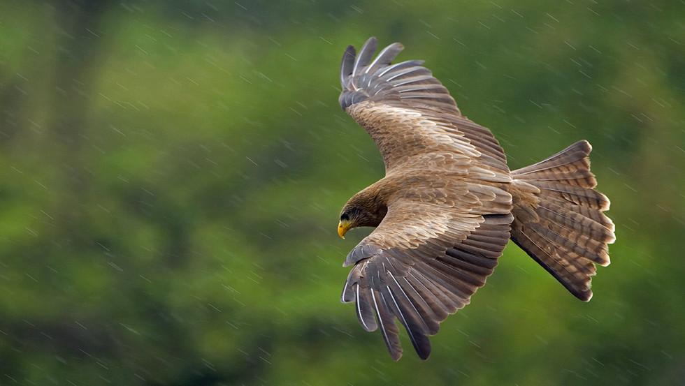 KAT wildlife photography_0073.jpg
