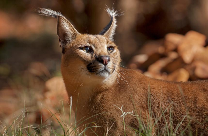 KAT wildlife photography_0038.jpg