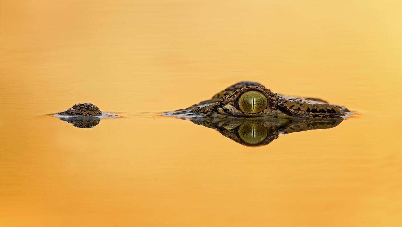 KAT wildlife photography_0043.jpg