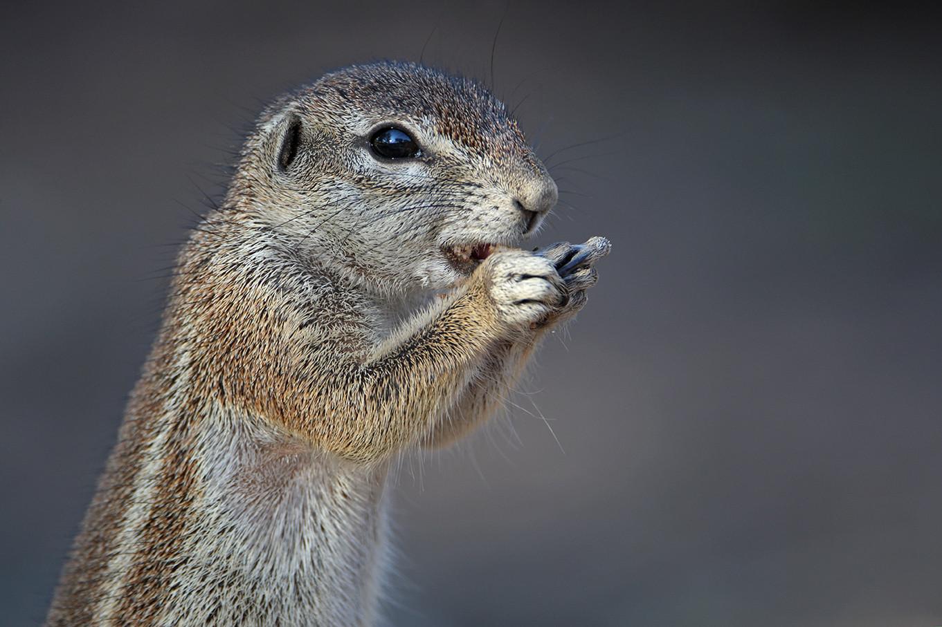 KAT wildlife photography_0054.jpg