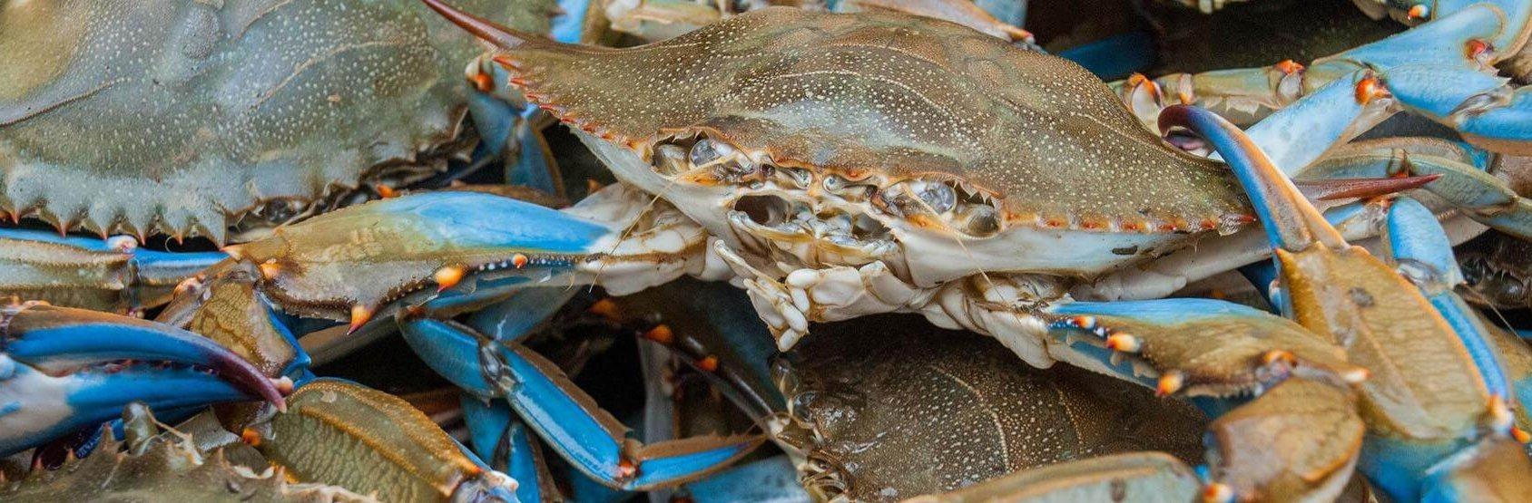 blue-crab_2_edited.jpg
