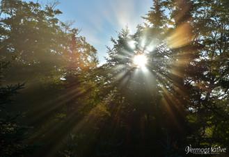 Sun Shinning in the Forset