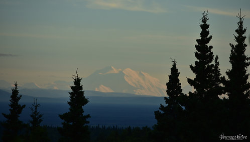 Alaska Range at Sunset with Trees