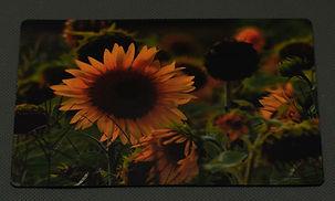sunflower mag.jpg