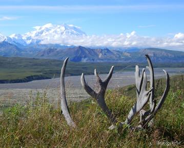 Horns and Denali