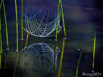 Dew Drop Spider Web on Water