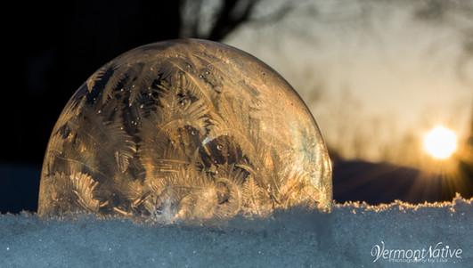 Golden Fern Bubble