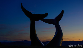 Blue hour Whale's Tails