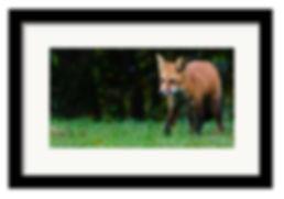 web frame.jpg