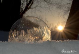 Crystal Fern Bubble