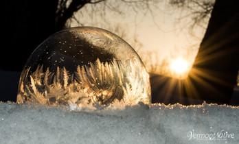 Sunrise Fern Bubble