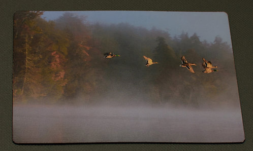 Fog and Duck on Water
