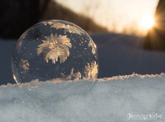 Flowering Sunrise Bubble