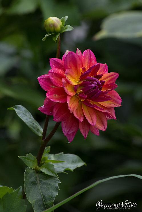 Jazzy Flower