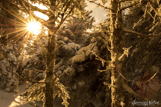 Sun Shining in the Winter Woods
