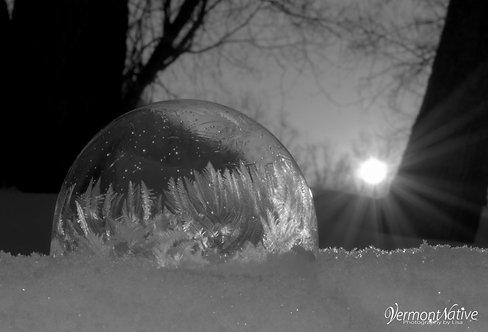 Black and White Sunrise Fern Bubble