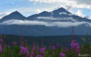 Chugach Mtn with Flowers