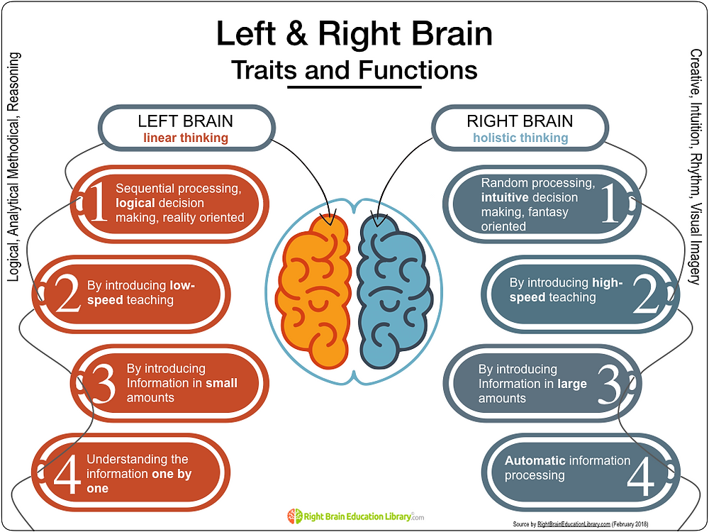 Left & Right Brain Traits and Functions - Right Brain Education