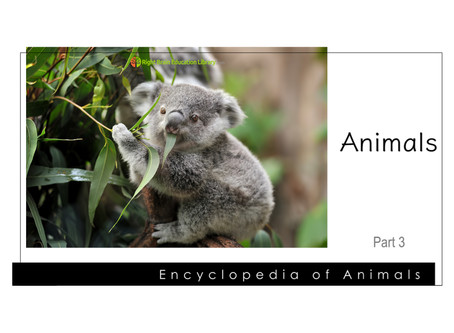 """More """"Encyclopedia Flash Cards"""" Added For Your Baby & Toddler"""