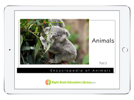 """More """"Encyclopedia Flash Cards"""" For Your Baby/Toddler"""