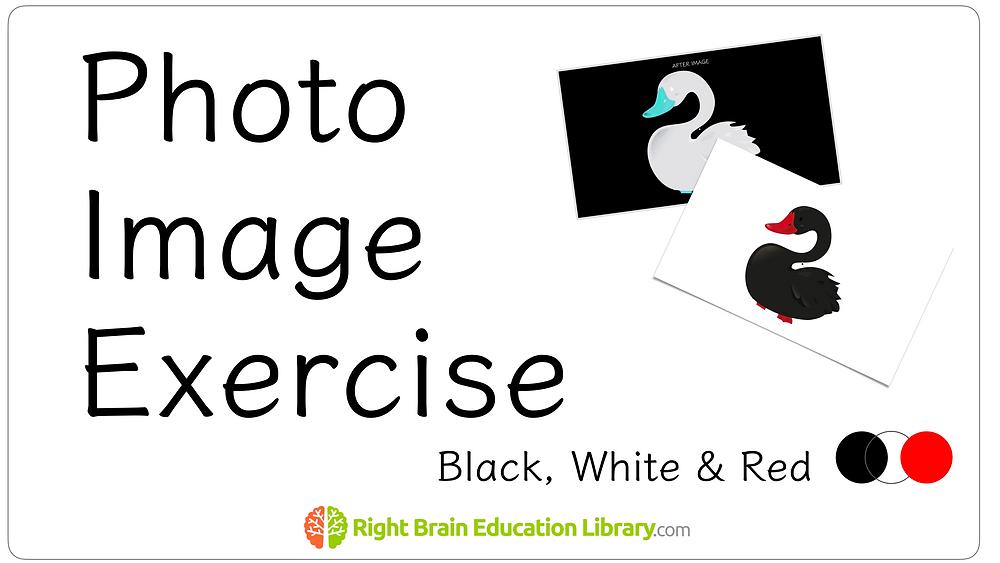Photo Image Exercise- Shichida Method