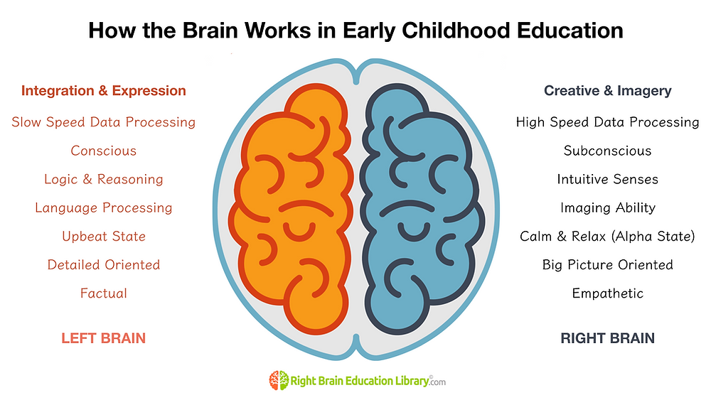 How the Brain Works in Early Childhood Education