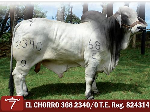 EL CHORRO 368 2340/0 T.E
