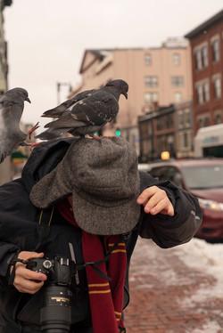 caleb pigeons