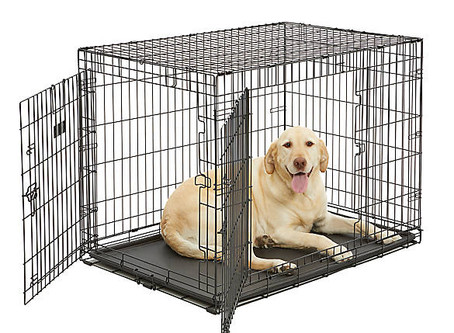 Make Your Dog Love Their Crate!