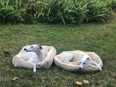 My Life as a Pet Sitter/Dog Walker