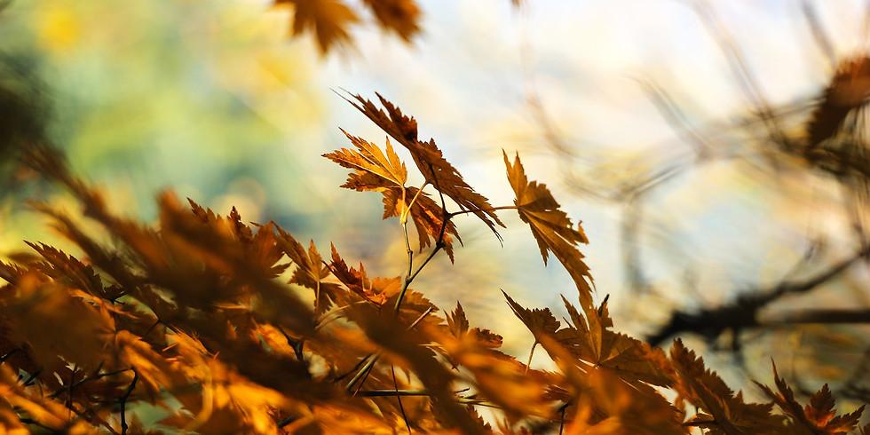 Yoga et marche d'automne, Animé par Héloïse