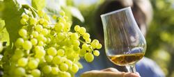 Vigne et Cognac
