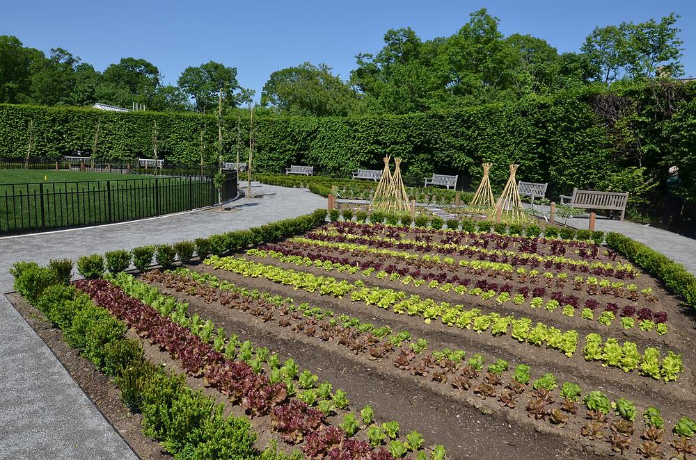 Ornamental vegetable garden inspired by Rosemary Verey