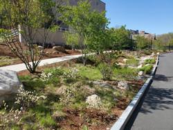 UConn UConn Gant Hall Landscape(2)