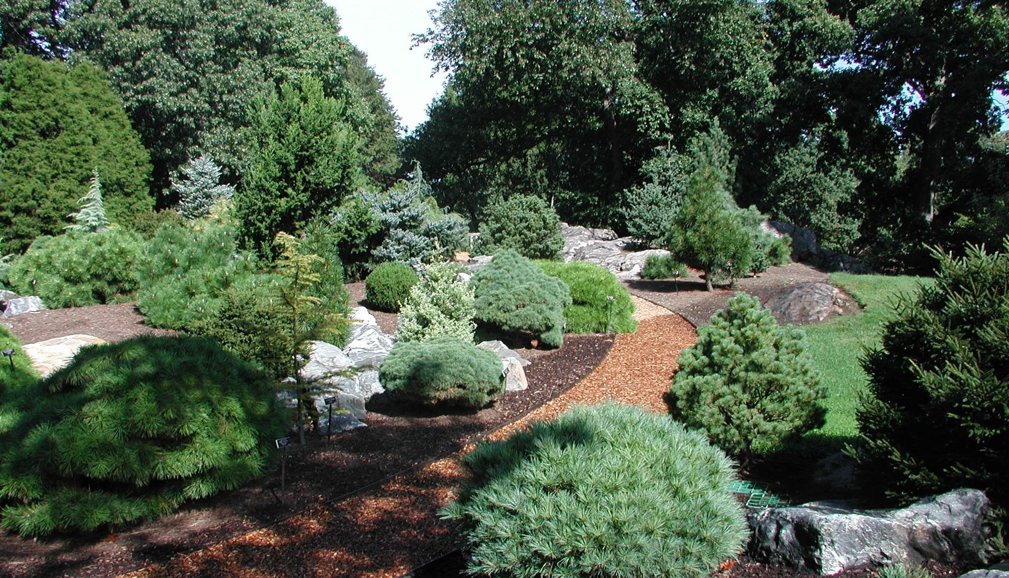 Benenson Ornamental Conifers