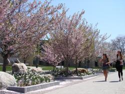 Fairfield University Quad