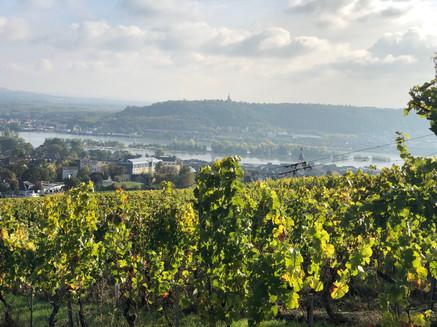 Rheingau.jpg
