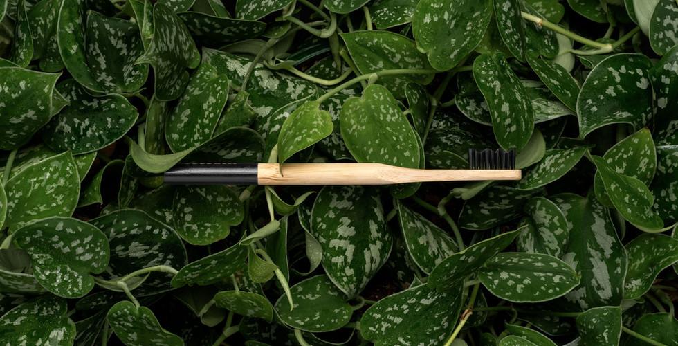 joe stevens_bamboo-black_enviro-plants_h