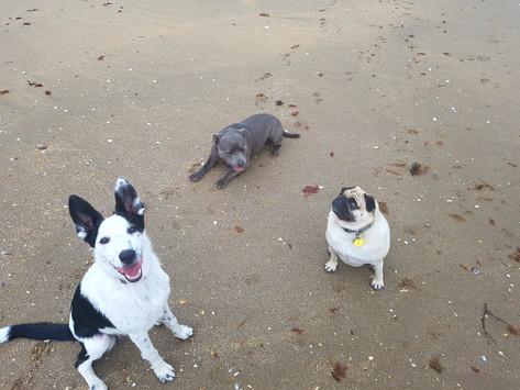 Luna, Freddie & Zeus