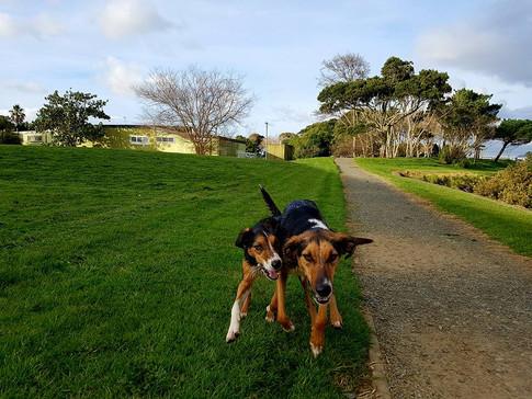 Flash & Ollie