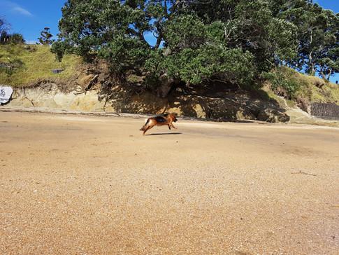 Bailey loving the beach