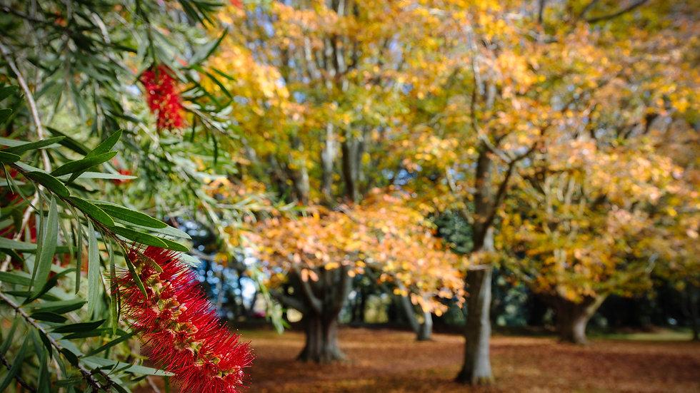 Cornwall Park - Auckland - Autumn