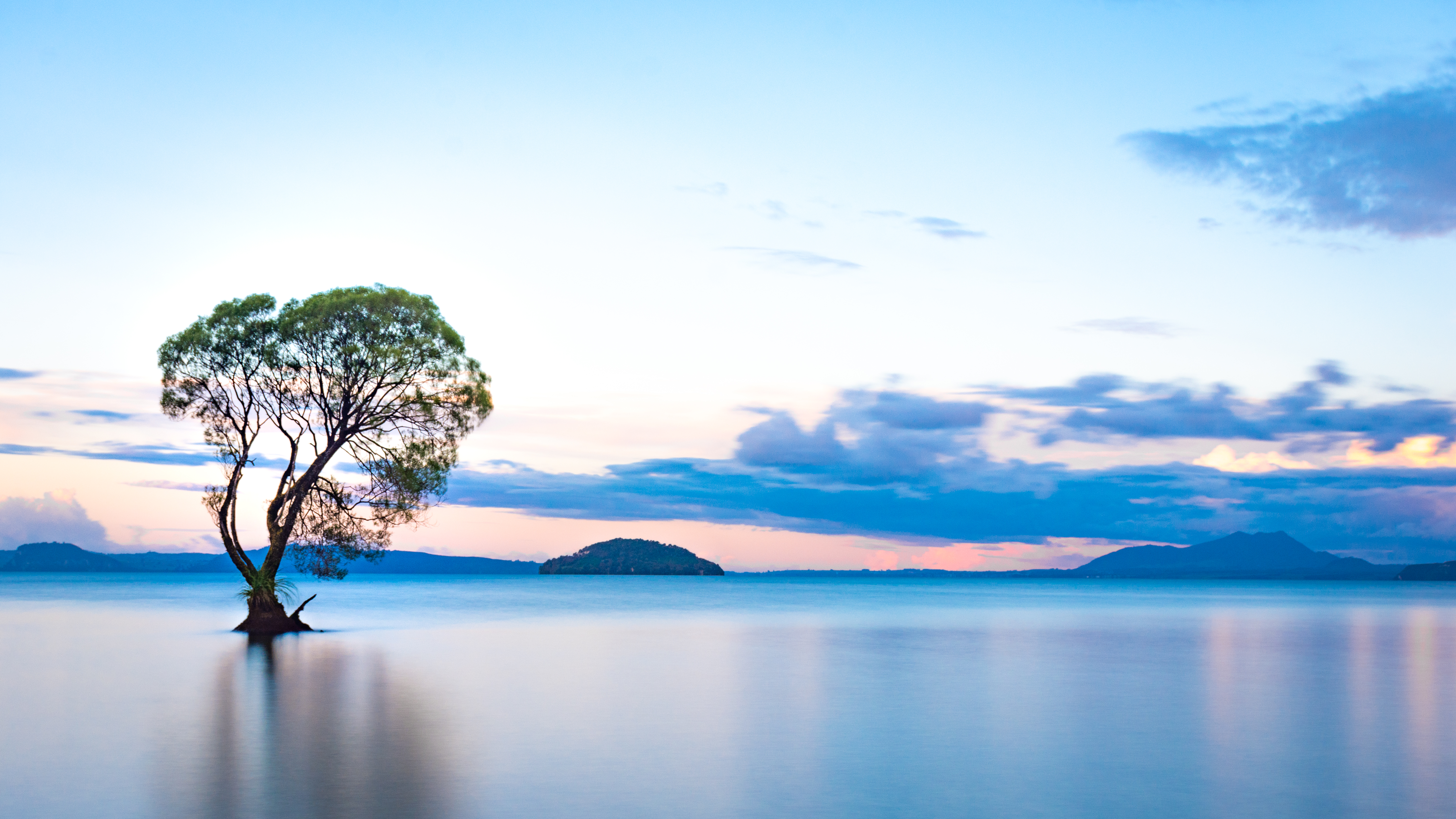 Taupo Tree