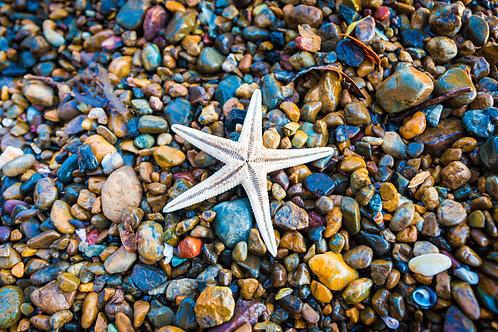 Starfish - Russell - North Island - New Zealand