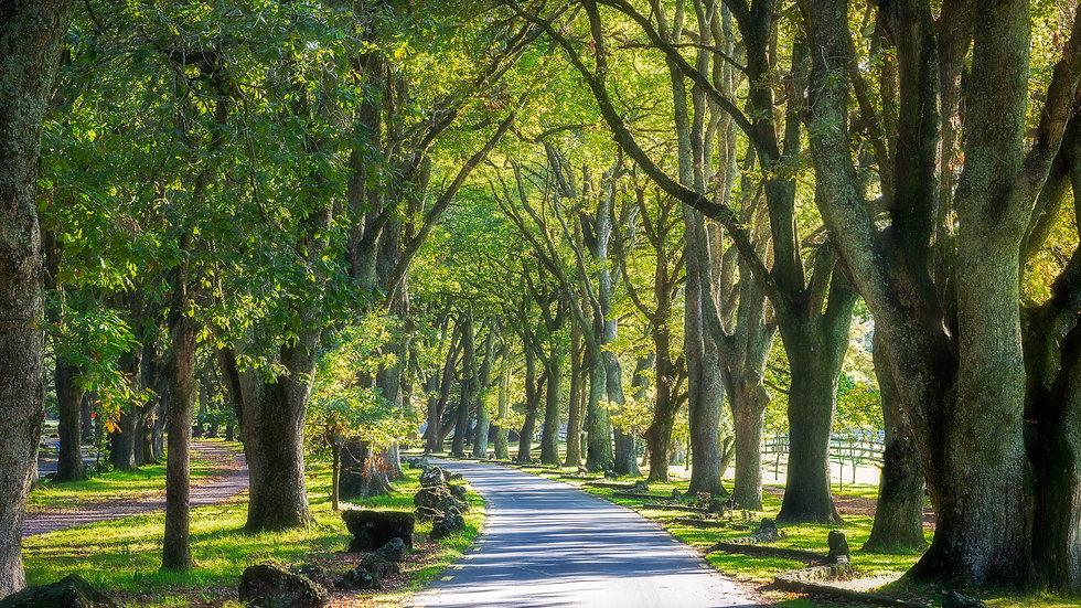 Twin Oaks Drive - Cornwall Park
