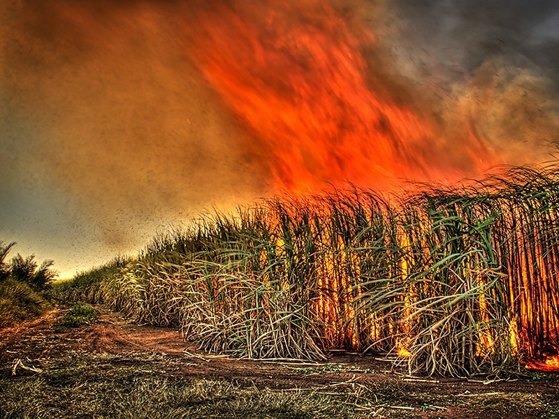 sugar-cane-burn_flickr_gavin-fordham