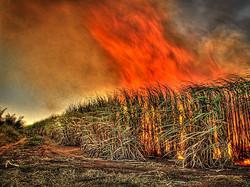 sugar-cane-burn_flickr_gavin-fordham