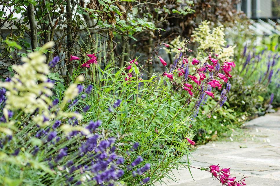 Jon Ash Garden Design - Penstemon, Astilbe, Lavender, Beech